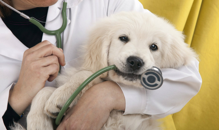 financial assistance for dog surgery