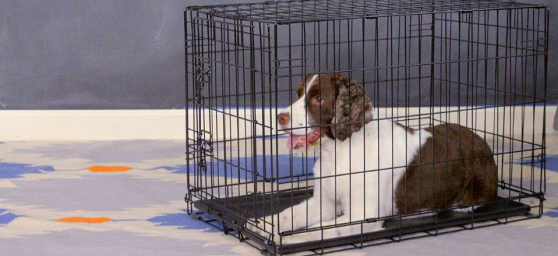 best dog crate for small dogs