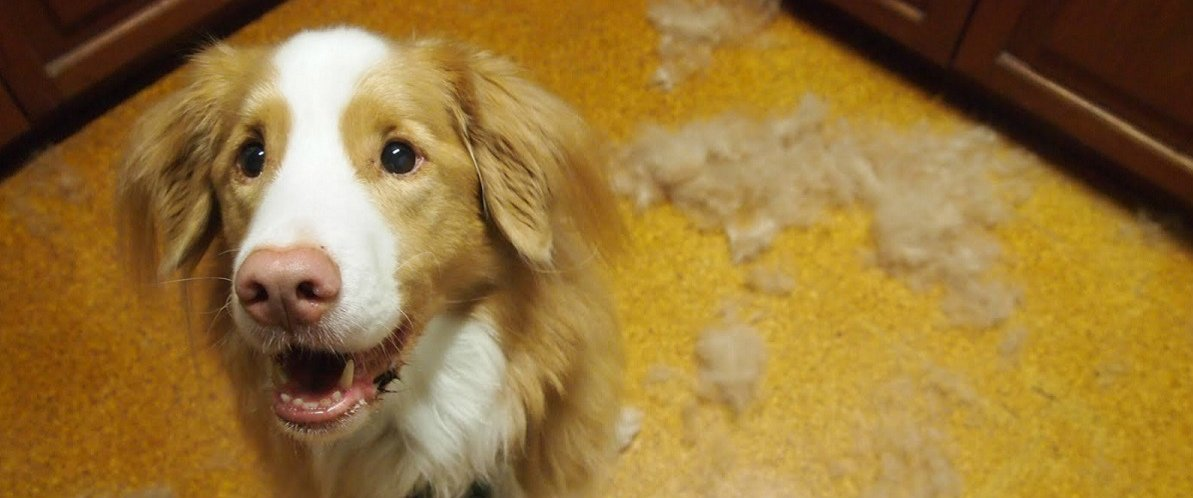 how to make my dog shed less