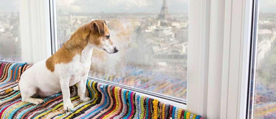 best big apartment dogs