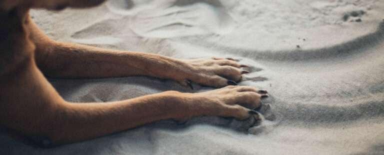 dog paw pad injury healing time