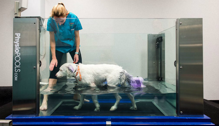 hydrotherapy for dogs near me