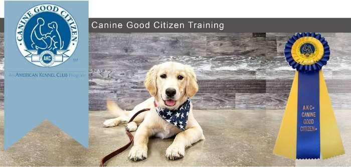 intermediate dog training