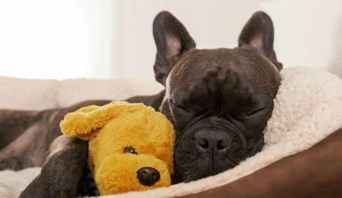 dog peeing in sleep at night